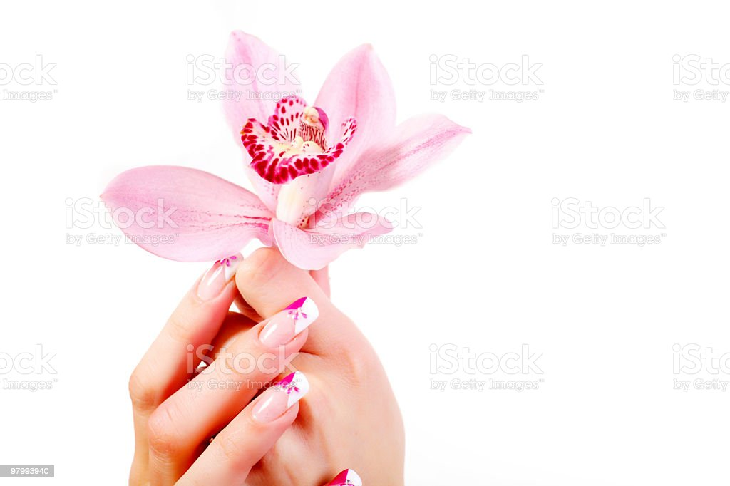 Woman's hands holding lovely pink orchid. royalty-free stock photo
