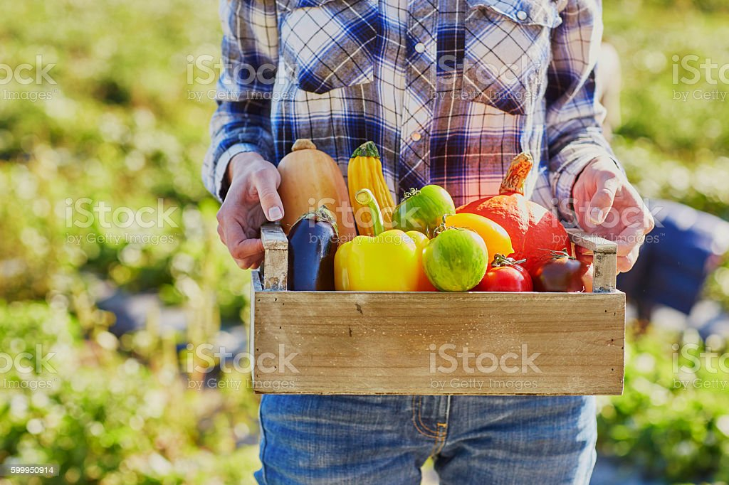 Woman's hands holding wooden crate with fresh organic vegetables stock photo
