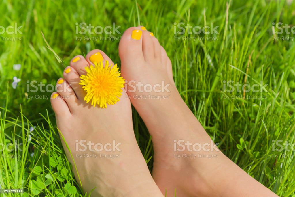 Woman's legs with yellow nails relaxing on the grass with dandelion between a toes in sunny spring day. Healthy feet. stock photo