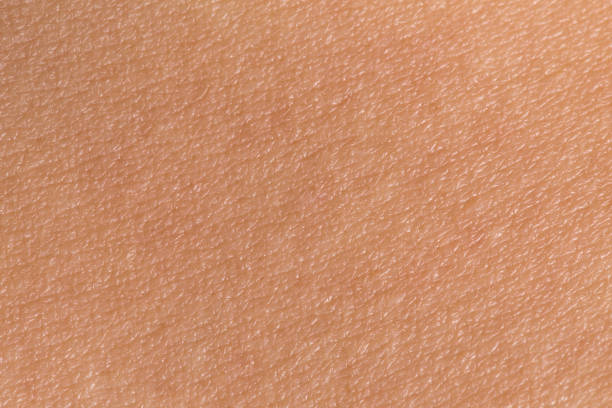 Woman's skin Woman's skin texture. Human skin closeup. Human skin background. skin stock pictures, royalty-free photos & images