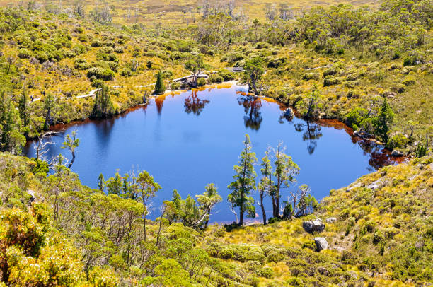 wombat pool - cradle mountain - cradle mountain stock photos and pictures