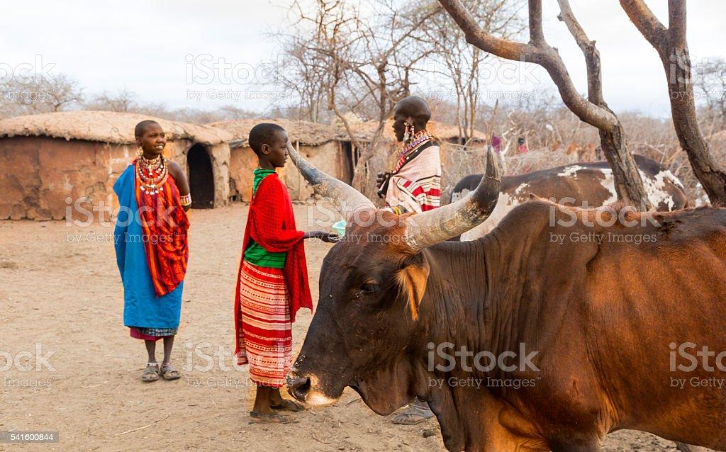 Women and cattle in Maasai village. Kenya stock photo