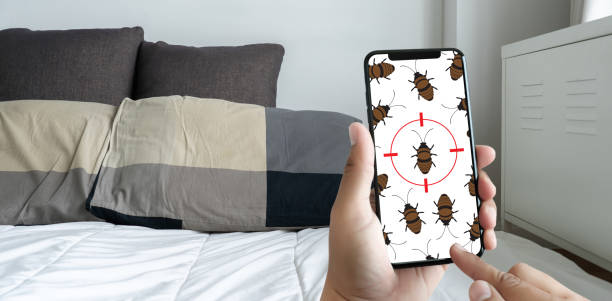Women are checking for unusual things and detecting bed bugs in the bedroom. Women are checking for unusual things and detecting bed bugs in the bedroom. pest stock pictures, royalty-free photos & images