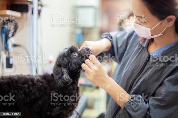 Women are cleaning a dog picture id1034211826?b=1&k=6&m=1034211826&s=612x612&h=vunwv1jb7nejsywqlptrahnvu04vysavgla4rfvfbfu=
