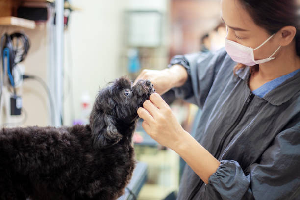 women are cleaning a dog. - pet shop and dogs not cats stock pictures, royalty-free photos & images