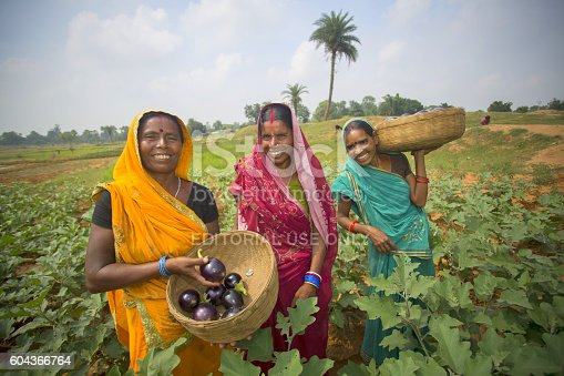 istock Women are standing in their eggplant field 604366764