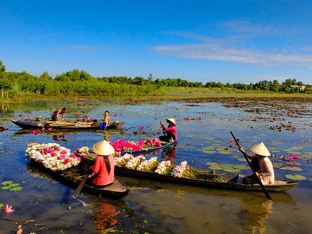 Women boating on lake to harvest water lilies stock photo