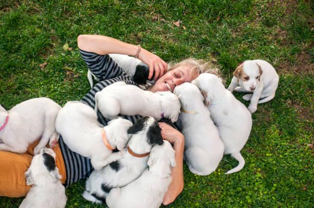 women enjoying with her dalmatian puppies - allevatore foto e immagini stock