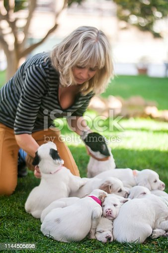 Dalmatian puppies and women playing on grass
