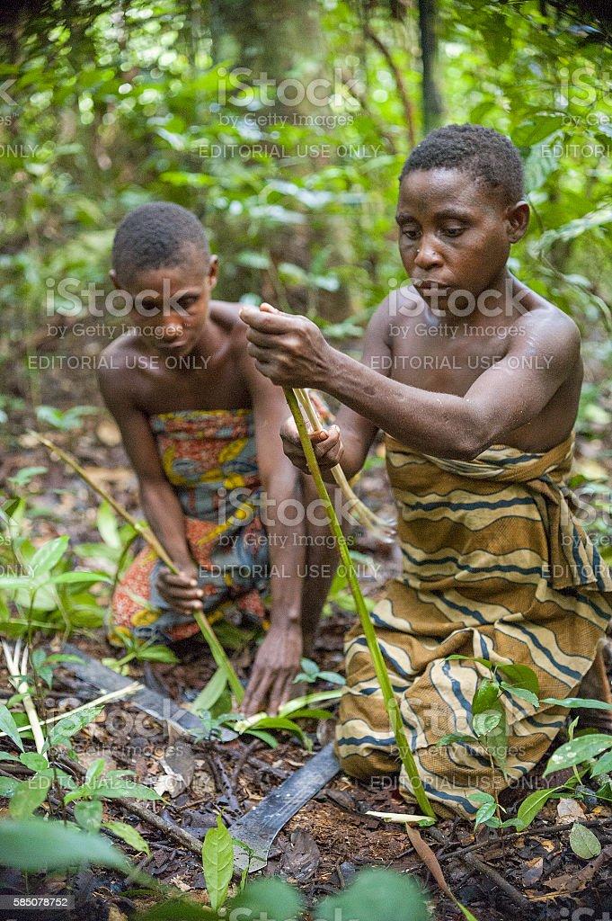 Women from a Baka tribe stock photo