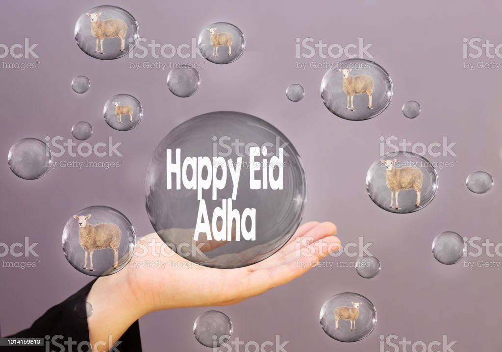 women hand holding bubble with happy eid adha text and sheep in bubble stock photo