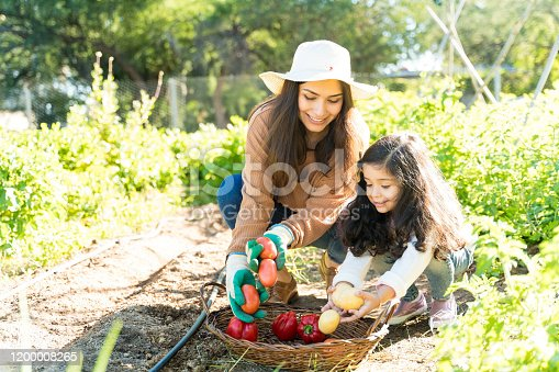 Hispanic woman with daughter collecting fresh vegetables in farm
