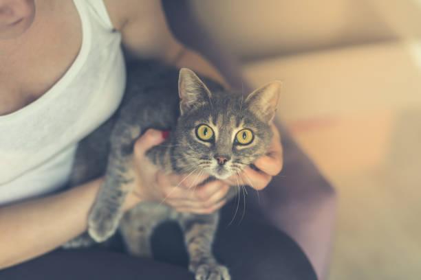 Women holding her cat picture id1047848516?b=1&k=6&m=1047848516&s=612x612&w=0&h=dab4iwaptdbmny1aa p vkq84ge0mz xdbduzz2ea7y=