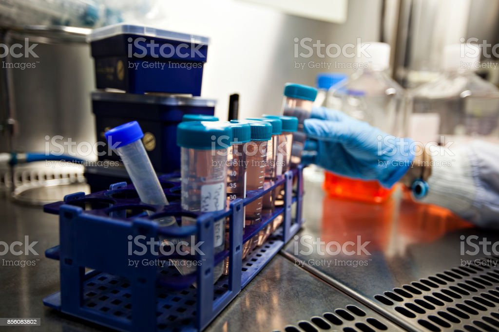 Women in STEM stock photo