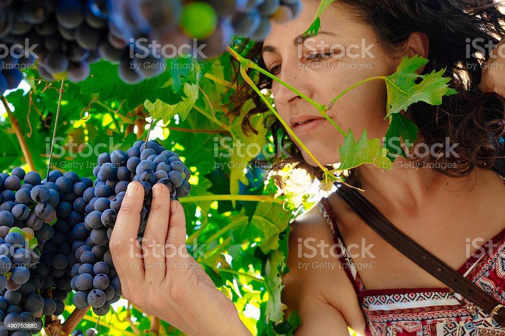 Mulher escolher cacho de uvas foto royalty-free