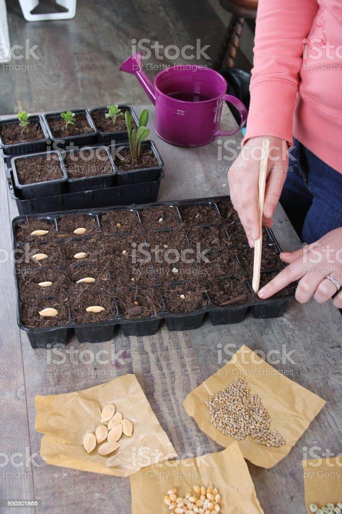 women planting seeds stock photo