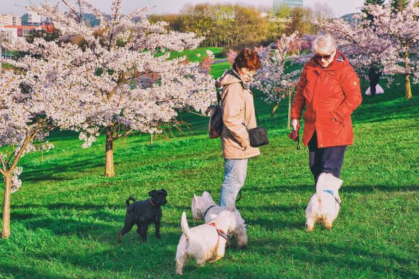 Women walking dogs at sakura cherry tree flowers garden vilnius picture id925628536?b=1&k=6&m=925628536&s=612x612&w=0&h=rvx6vhulteq6kzkaabzkjok7zzmktj6ufshdtiqfaue=