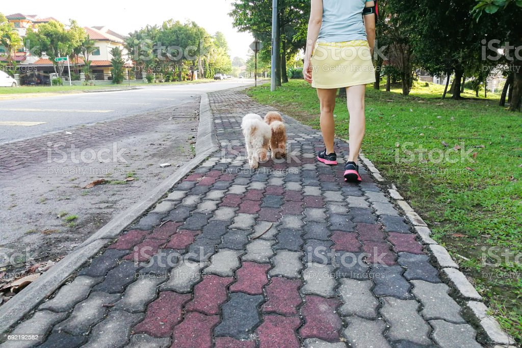 Women walking obedient smart poodle dogs without needing leash stock photo