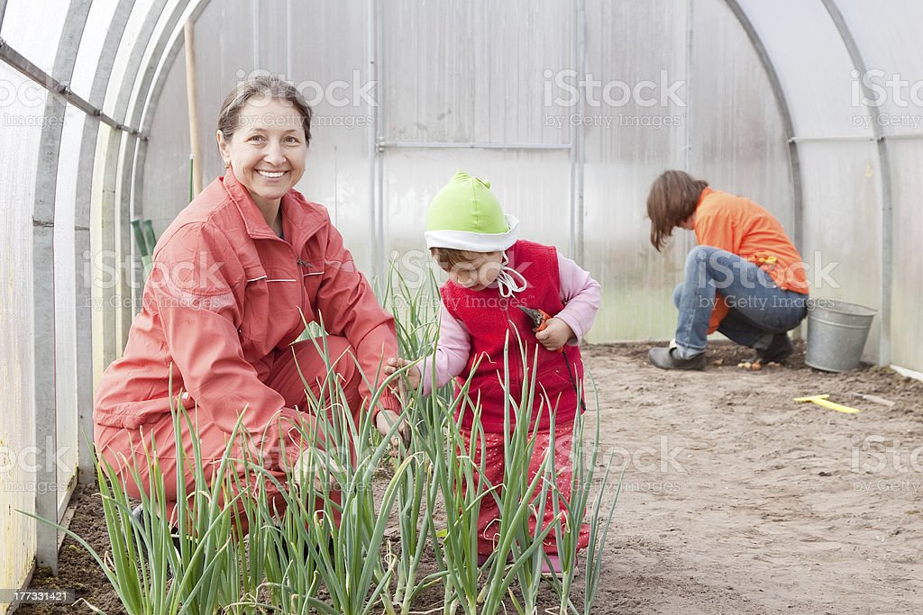 women with child works at hothouse royalty-free stock photo