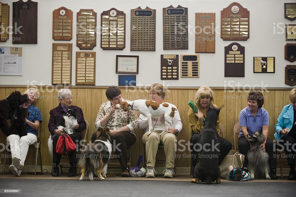 Women with various purebred dogs royaltyfri bildbanksbilder