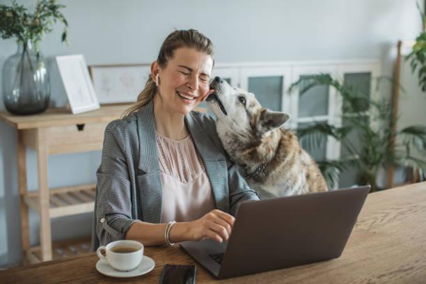 donne che lavorano durante il periodo di isolamento - owner laptop smartphone foto e immagini stock