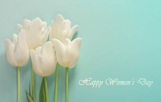 Womens day card. White tulips on a light turquoise background stock photo