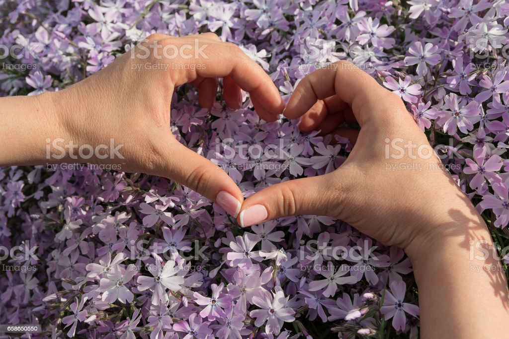 Women's hands folded in the shape of a heart stock photo