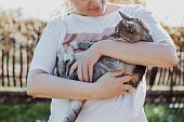 Women's hands hold pet, gray cat. Joy of communicating with animals