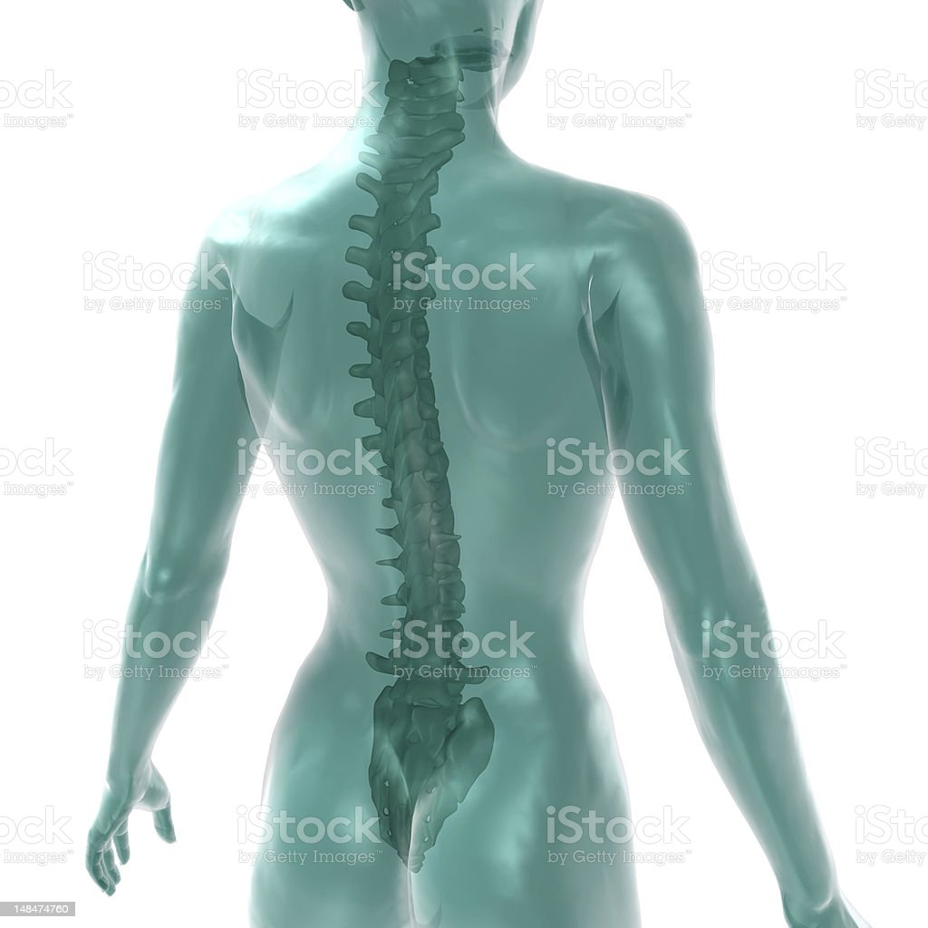 women's spine on white royalty-free stock photo