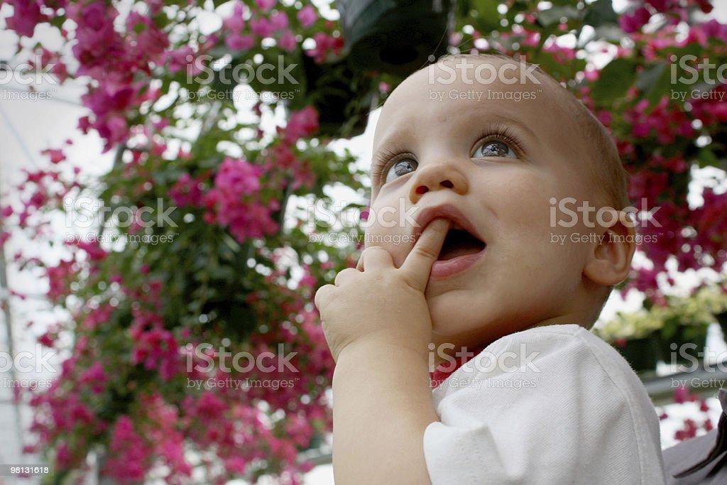 Chiedo agli occhi di un bambino foto stock royalty-free