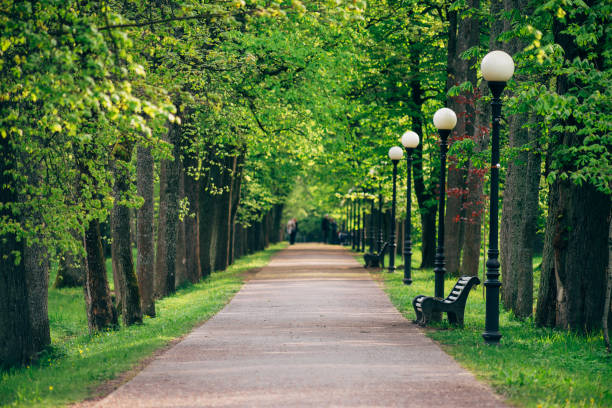 Wonderful alley with fresh springtime trees – Foto