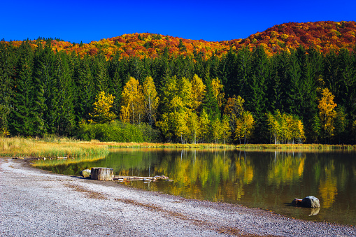 Spectacular autumn landscape with colorful deciduous trees in the forest and famous volcanic lake. Beautiful touristic and travel destination with Saint Ana lake, Transylvania, Romania, Europe
