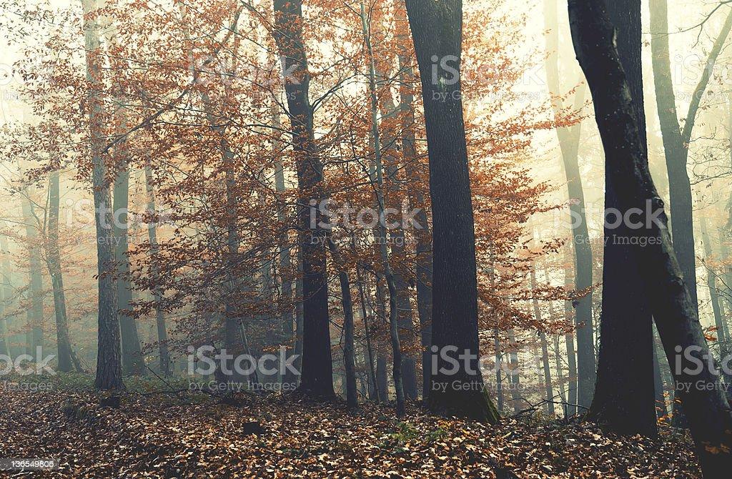 Wonderful autumn morning royalty-free stock photo