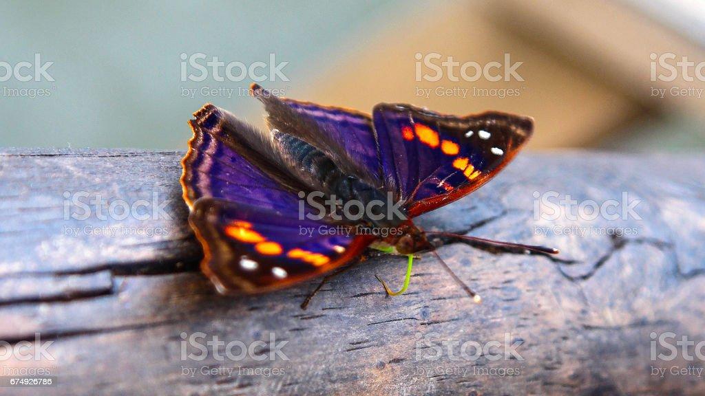 Wonderful butterfly royalty-free stock photo