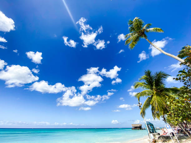 wonderful caribbean white sandy beach in La Romana, Dominican Republic stock photo