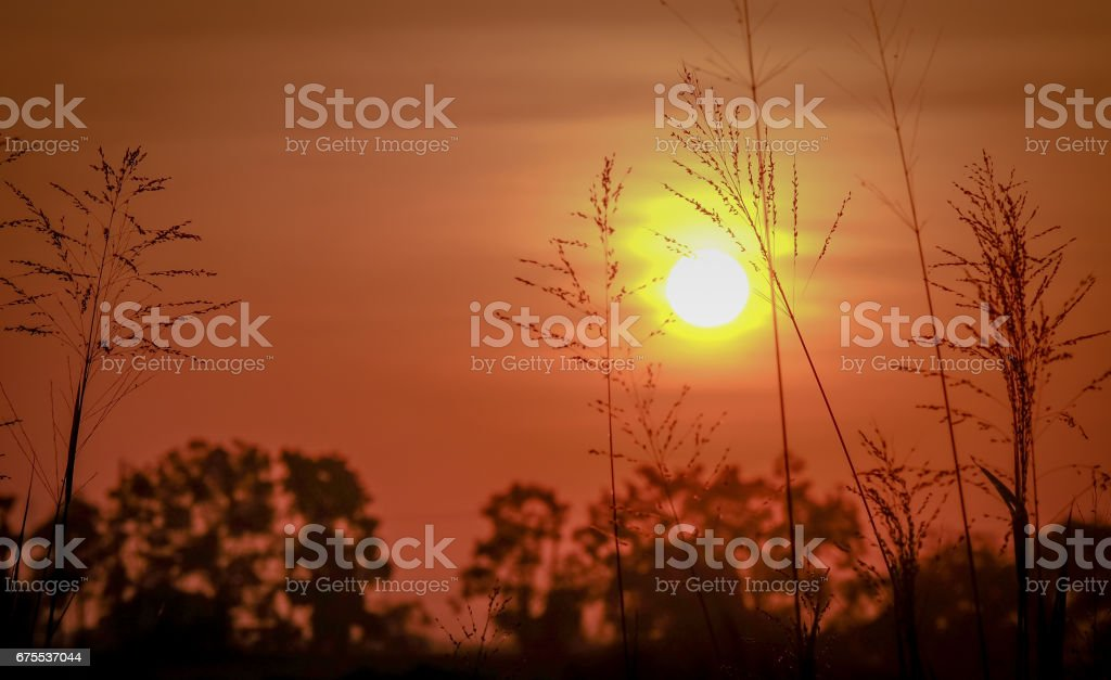 magnifique scène dramatique. lever de soleil fantastique sur l'alpage photo libre de droits