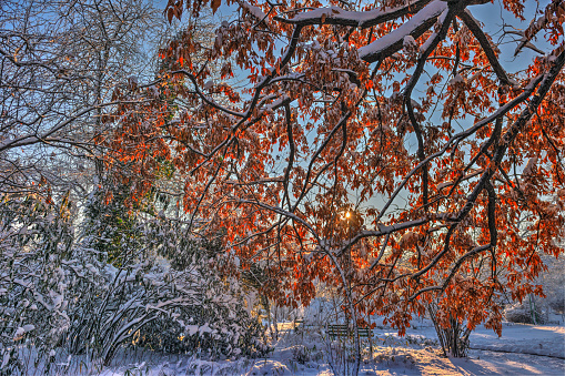 Tone mapped HDR image of a wonderful winter scene/landscape with frozen autumn leaves.