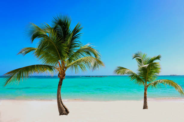 wonderful exotic tropical white sandy beach in Punta Cana, Dominican Republic, Caribbean Sea stock photo