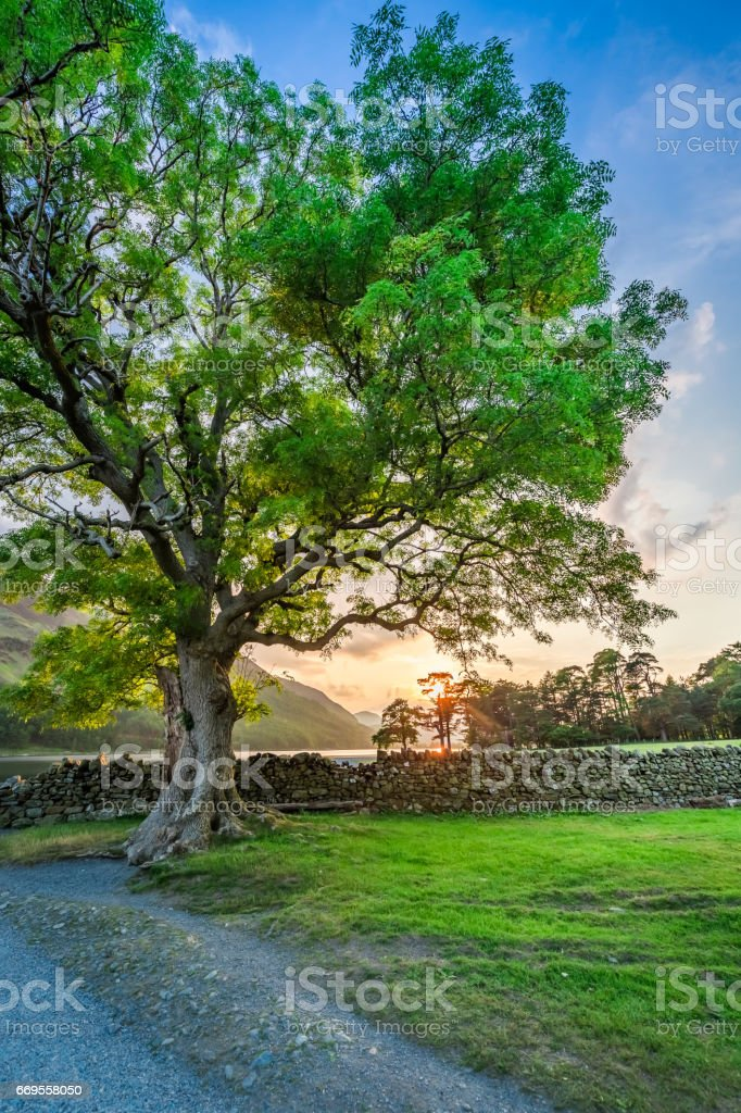 Wonderful field with big tree in District Lake, England stock photo