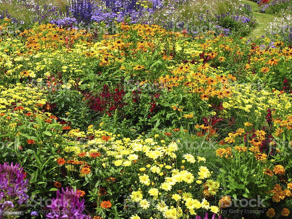 Wonderful flowerbed royalty-free stock photo