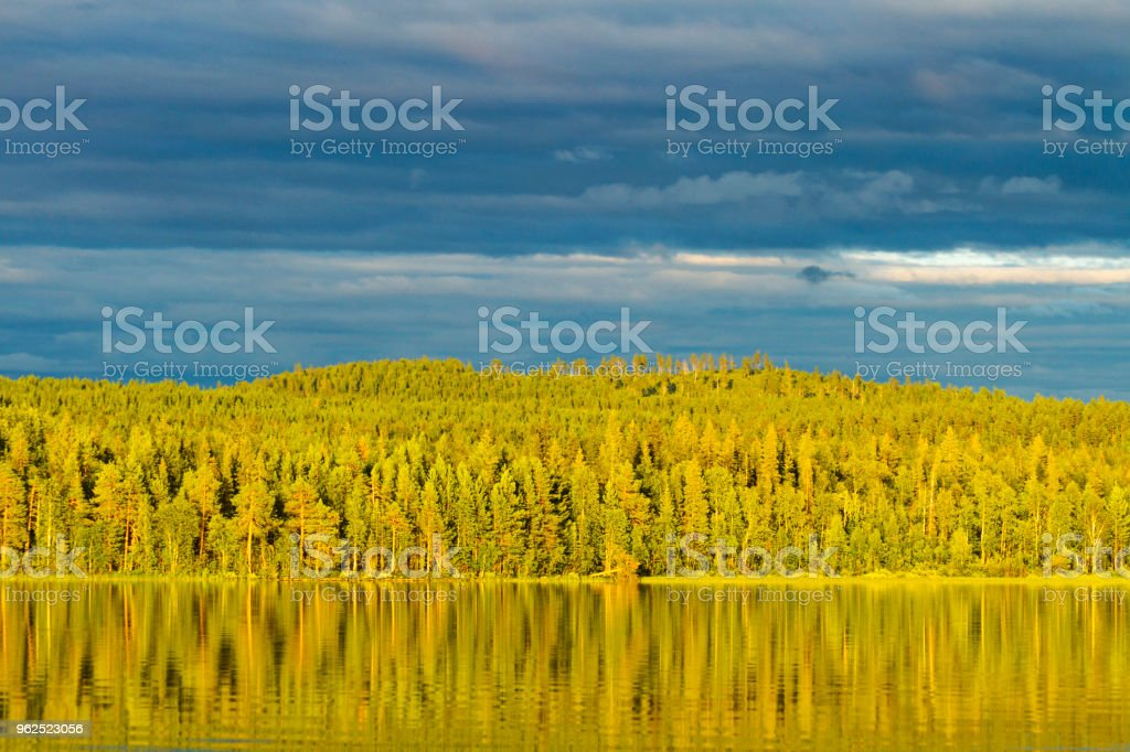 wonderful forest in the sun and reflection in the water - Royalty-free Activity Stock Photo