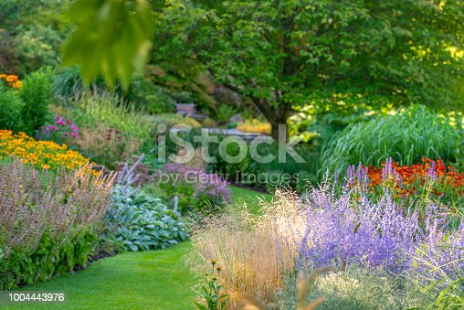 Lavish garden in many colors. Morning light.