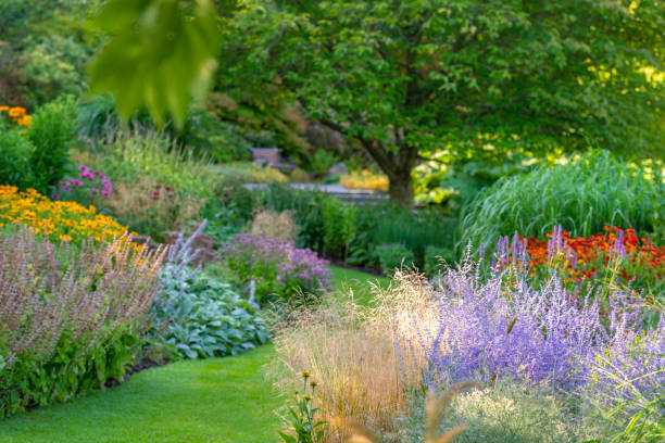 Wonderful garden Lavish garden in many colors. Morning light. perennial stock pictures, royalty-free photos & images