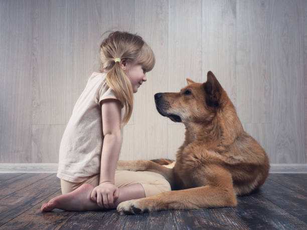 A wonderful little girl and a huge dog communicate with each other stock photo