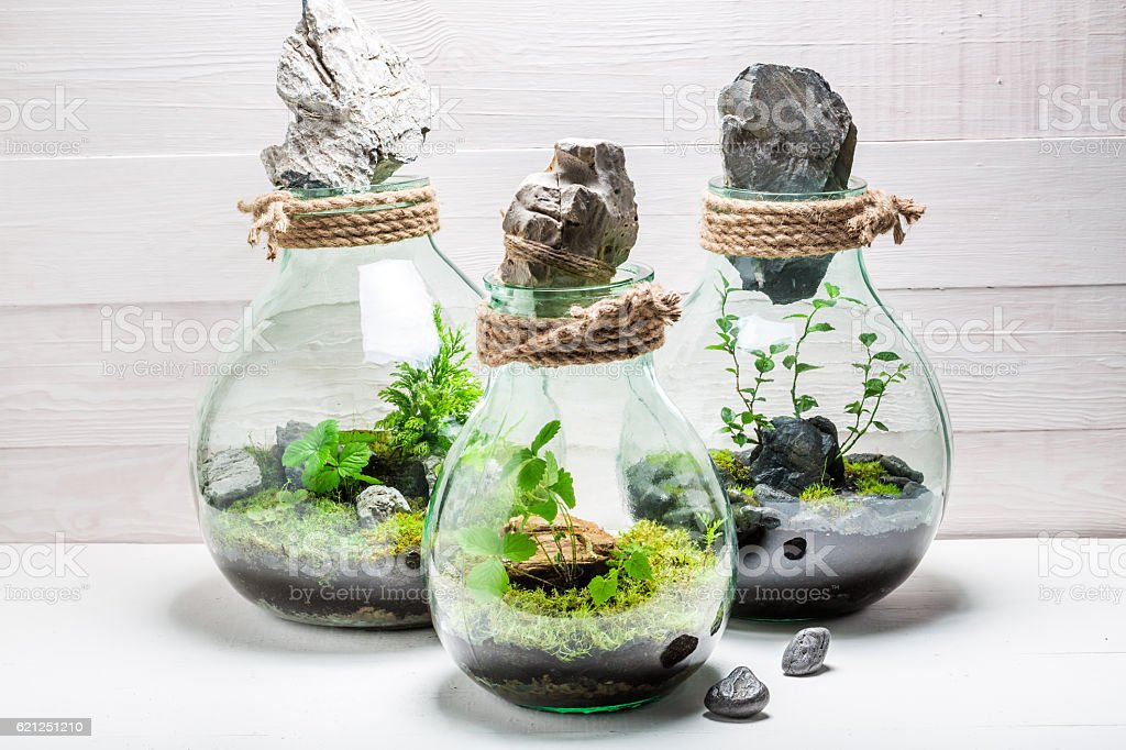 Wonderful live plants in a jar with self ecosystem stock photo