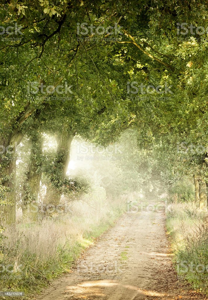 Wonderful mood light in the green forest royalty-free stock photo