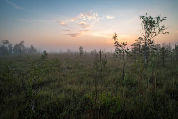 underbar natur landskap - pine forest sweden bildbanksfoton och bilder