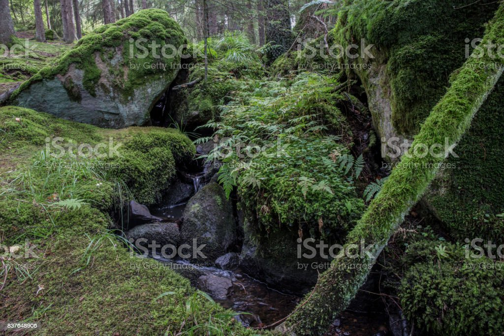 Wonderful old forest stock photo