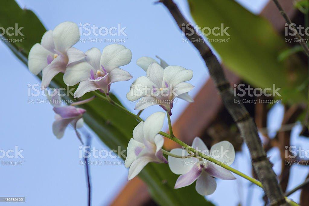 Wonderful Orchid stock photo