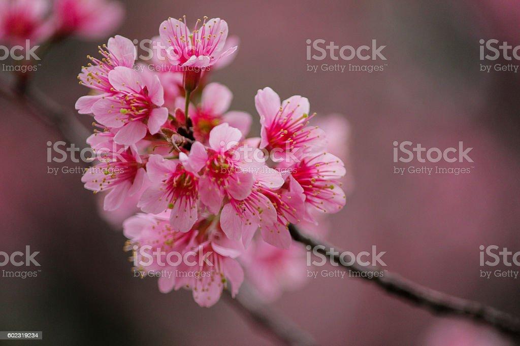 wonderful pink flower stock photo